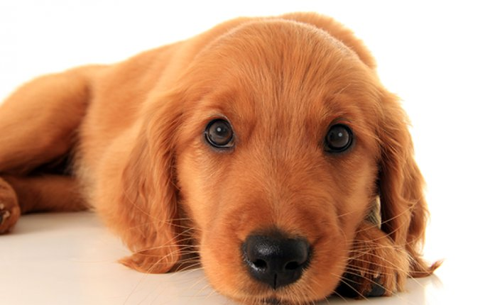 An Emotional Support Animal Can Help With Anxiety