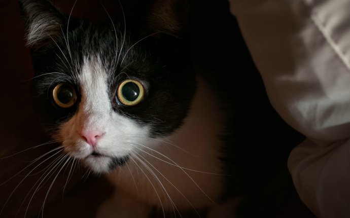 Anxiety and Compulsive Disorders in Cats | petMD
