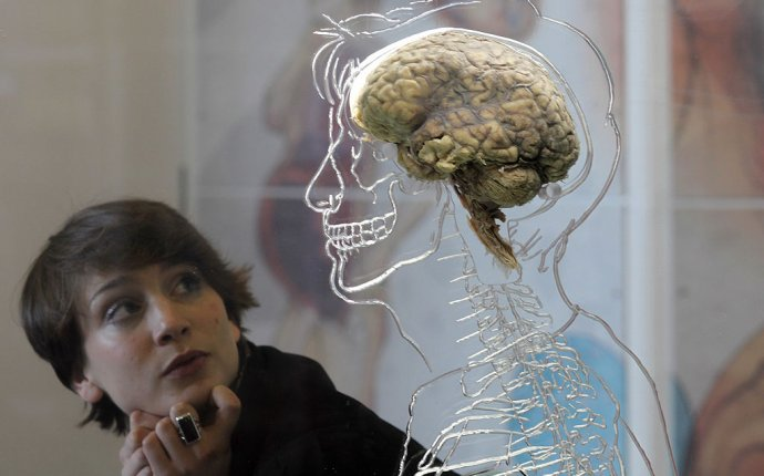 Brain Donors Needed in Finding Cure for Mental and Psychological